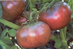Heirloom Tomatoes - Cherokee Purple