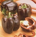 Peppers - Sweet Chocolate Beauty