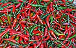 Peppers - Hot Super Chilli