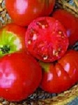 Heirloom Tomatoes - Cosmonaut Volkov