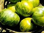 Heirloom Tomatoes - Green Zebra