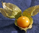 Tomatoes - Ground Cherry