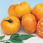 Heirloom Tomatoes - Striped German