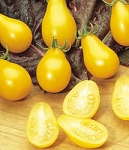 Tomatoes - Yellow Pear