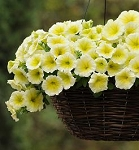 Hanging Basket - Wave Petunia-Easy Wave Yello
