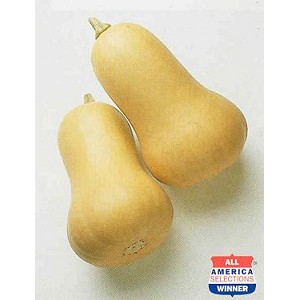 Squash, Winter - Butternut - Organic