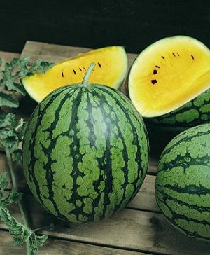 Watermelon - Yellow - Organic